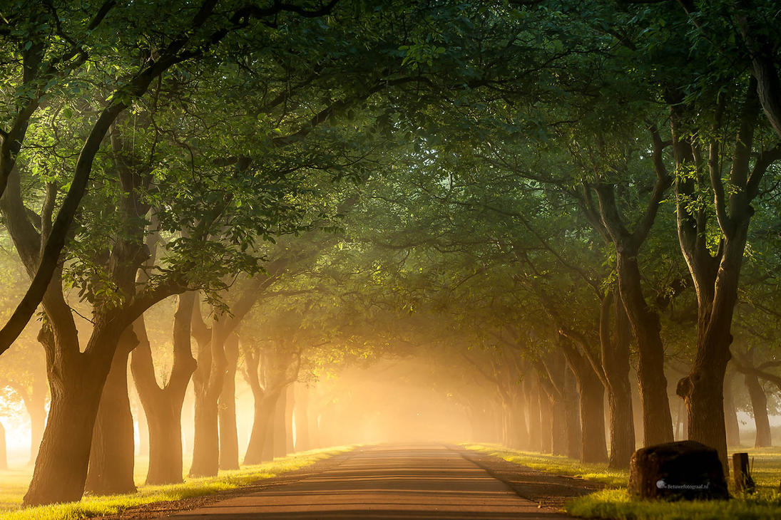 The Road that will Take me home by Betuwefotograaf