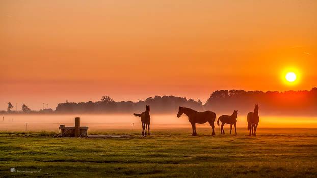 Horses in the mist.......... by Betuwefotograaf