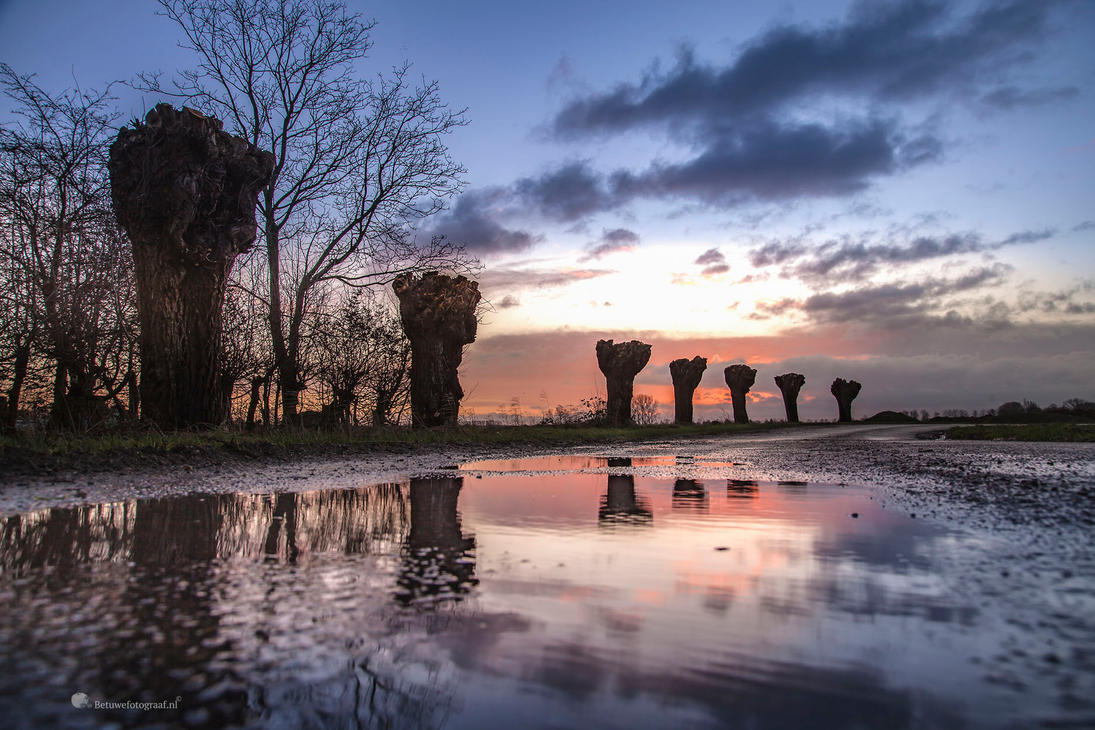 Sunrise in a puddle by Betuwefotograaf
