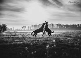 Danciing with horses