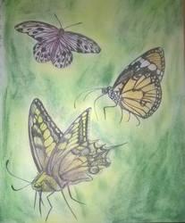 Three Butterflys by AmandaFerguson070707