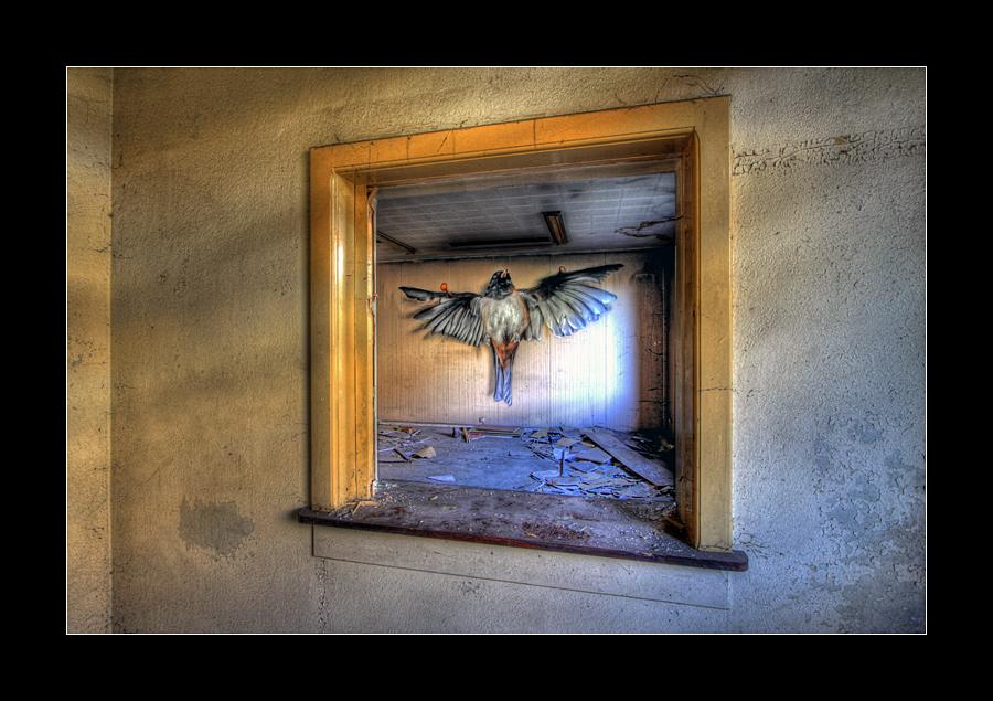 Tortured Bird by 2510620