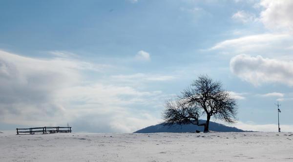 winter tree. by kej-ti