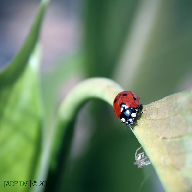 Adventures of a ladybird by Jade-DV