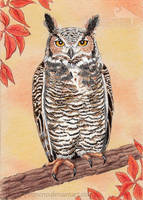 Great Horned Owl by Strecno