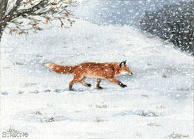 Winter Fox ACEO by Strecno