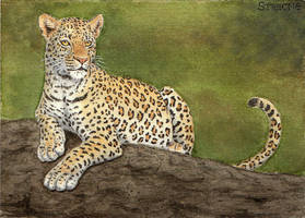 Leopard ACEO by Strecno