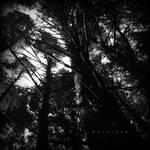 El arbol del bosque negro