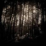 Olor de bosque