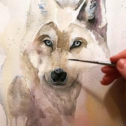 Work in progress, watercolor wolf