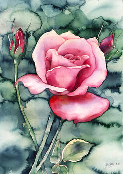 Watercolor ROSE (video-tutorial)