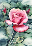 Watercolor ROSE (video-tutorial) by jane-beata