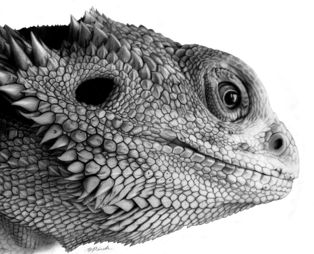 how to draw a lizard head