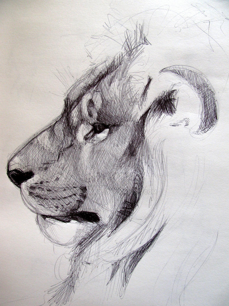 Awesome pencil drawings of animals