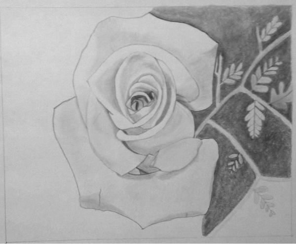 WIP4:  Rose in Graphite Pencil 12/02/2012 by ChrisDutton