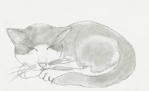 Rupert sketch