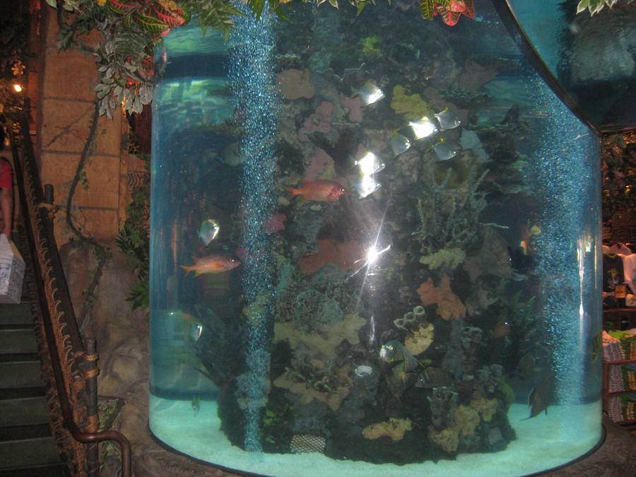 Fish tank in Rain Forest cafe by PrincessCarol on DeviantArt
