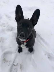 Mason in the snow