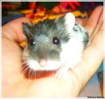 hamster by clainou-helnou