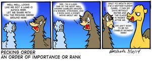 RANDOM: Camelid Moment