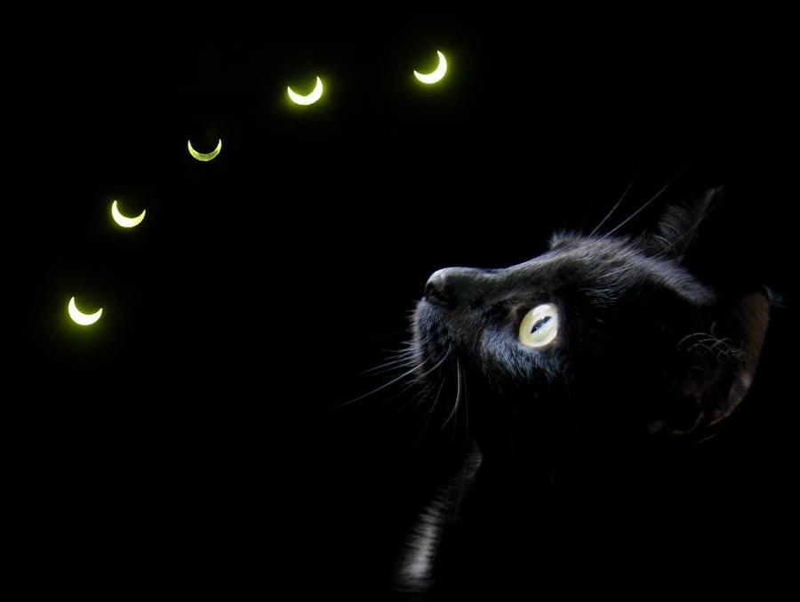 Cat Solar Eclipse Meme