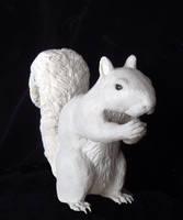 Squirrel by AlexCFriend