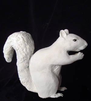 Squirrel Side
