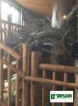 Eagle Nest side - Sinnemahoning State Park, PA