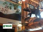 Chokecherry + Bear - Sinnemahoning State Park, PA