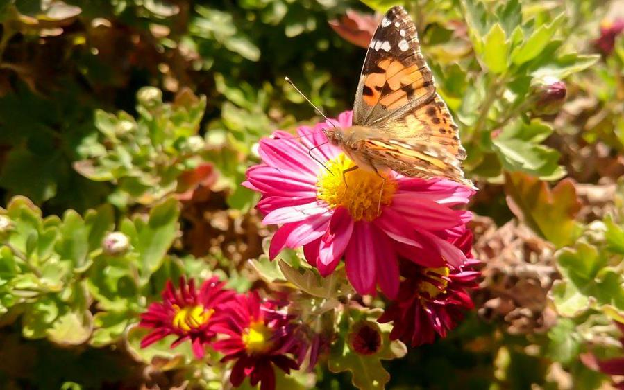 Butterfly by djamouli01