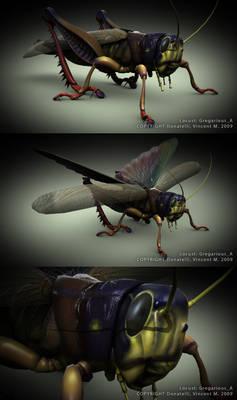 Gregarious Locust A