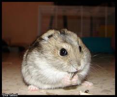 hamster by DorTabsti