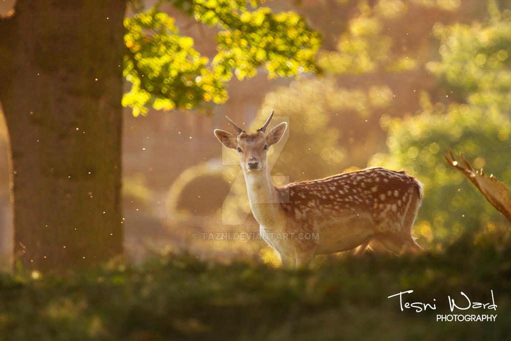 The Golden Hour by Tazni