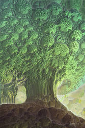 The Tree by janhein