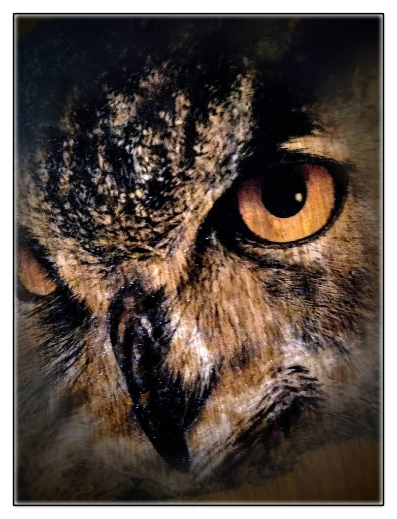 Owl to Wood transfer by schwarz1977