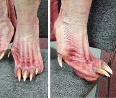 Bat Foot by Shyailu
