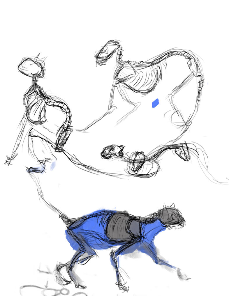 Cat Anatomy Sketches by BonesHolden on DeviantArt