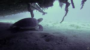 Underwater Turtle by MAEDesign
