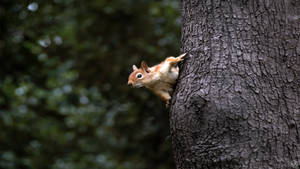 Squirrel by MAEDesign
