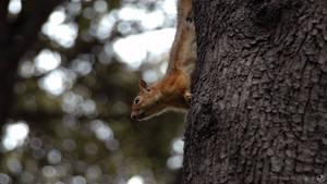 Gotcha! Squirrel by MAEDesign