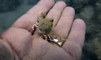Crab Baby