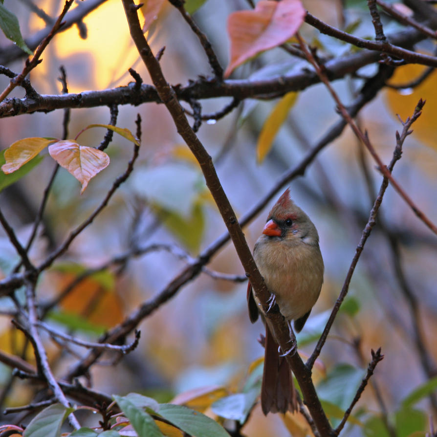 November dawn by clippercarrillo
