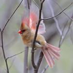 The Fragile Bird