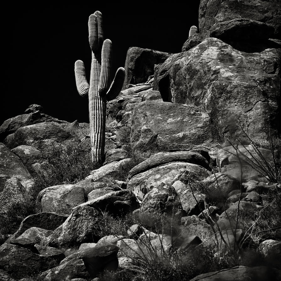 Arizona Detail by clippercarrillo