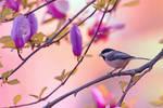 Sweet Magnolia Song