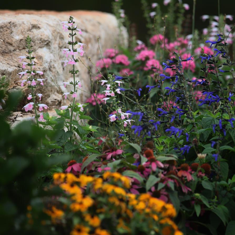 Garden Question by clippercarrillo