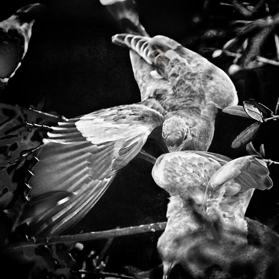 Wing Song by clippercarrillo