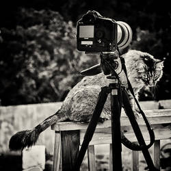 Bird Photographer's Cat