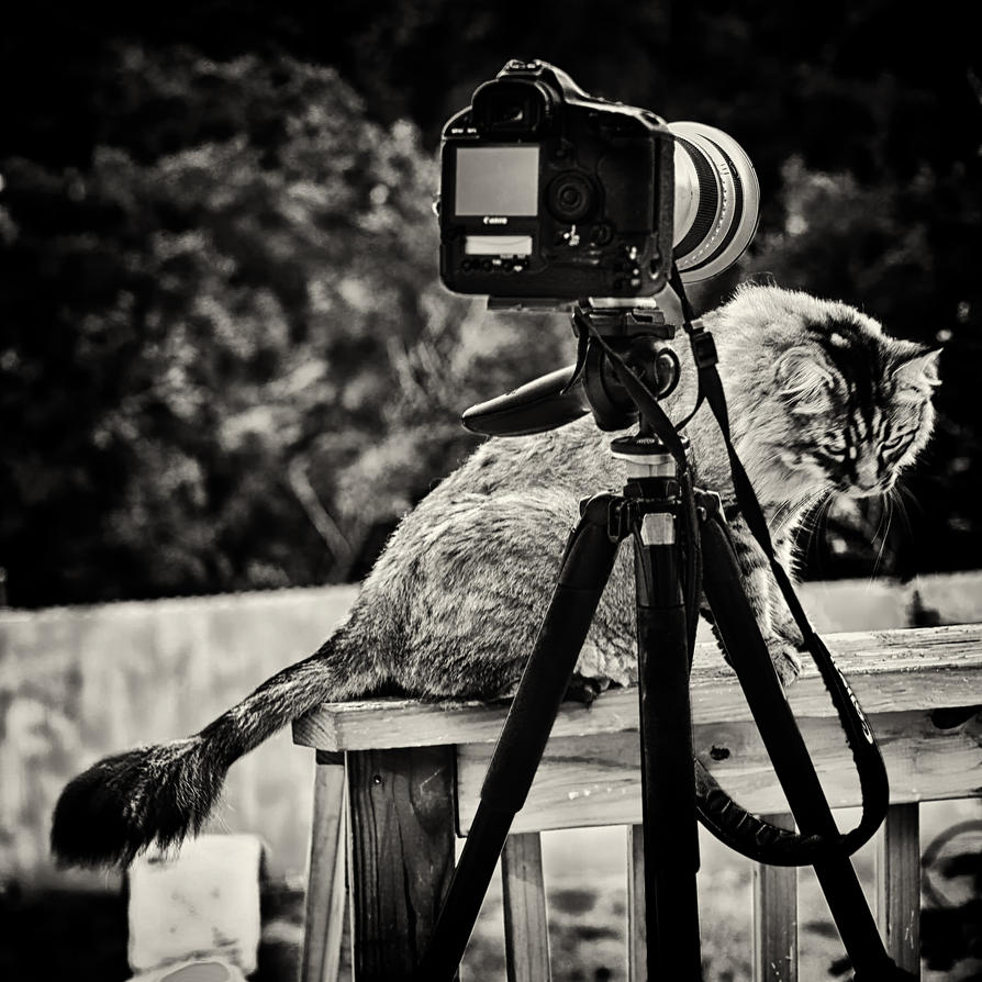 Bird Photographer's Cat by clippercarrillo