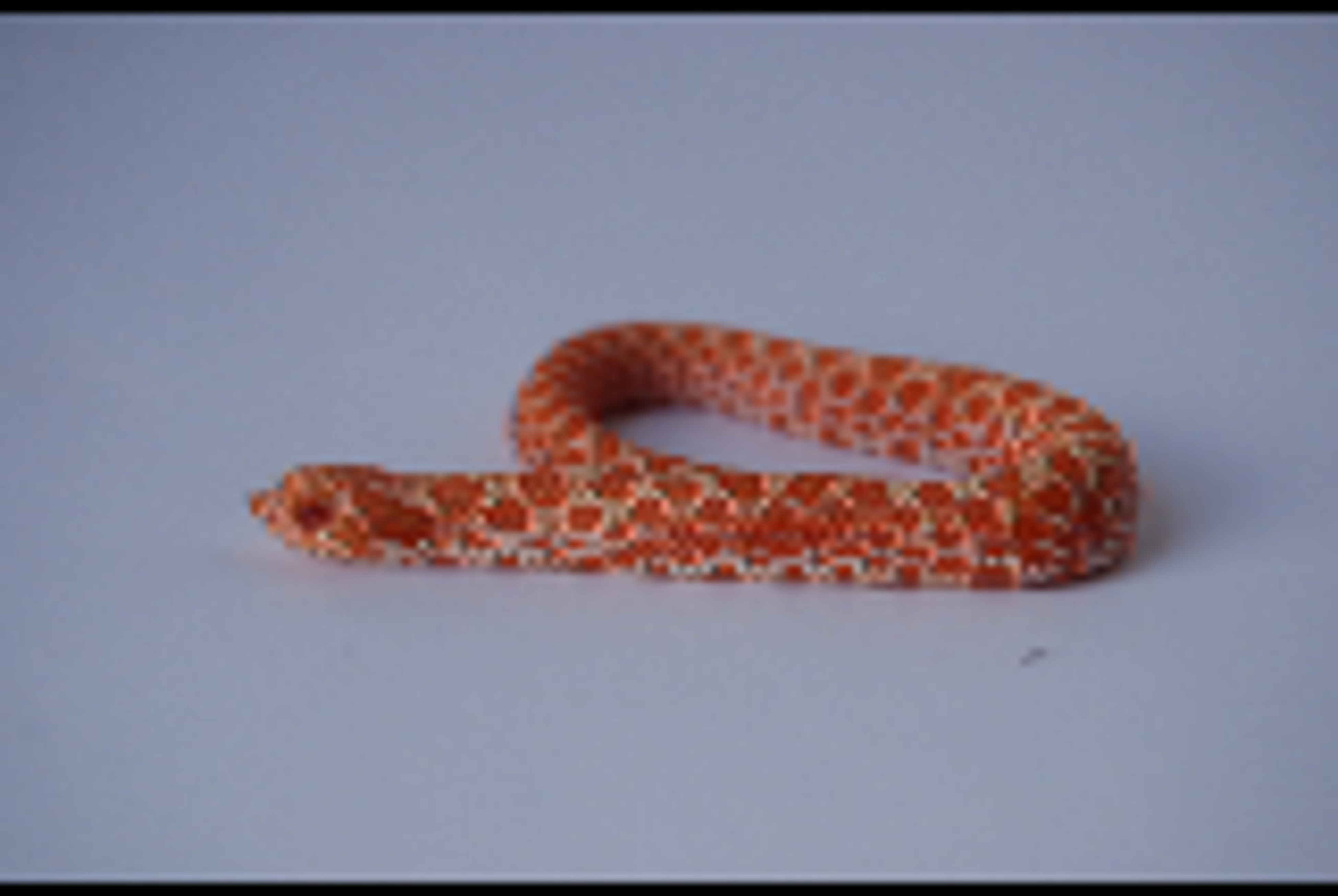Baby Albino Hognose 2 by FearBeforeValor